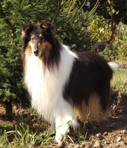 Odin2012-4